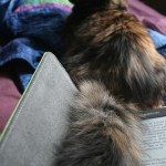 cat and kindle